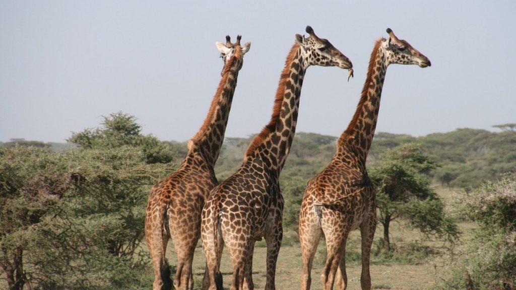 Quels sont les atouts de la Tanzanie pour un safari ?